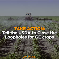 Take action: tell the USDA to close the loopholes for GE crops