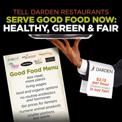 Tell Darden Restaurants to Serve Good Food: Healthy, Green, and Fair
