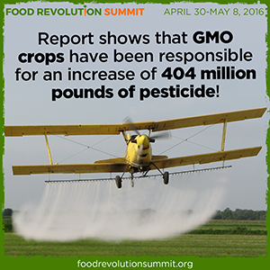 Rerport shows that GMO crops are responsible for an increase of 404 million pounds of pesticide!