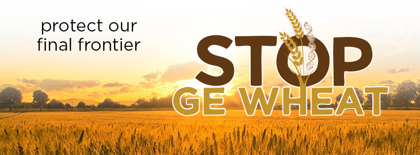 Stop GE Wheat - protect our final frontier