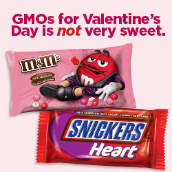 GMOs for Valentine's Day is not very sweet