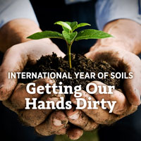 international year of soil - getting our hands dirty