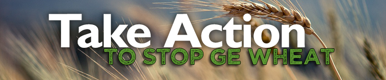 Take Action. To Stop GE Wheat